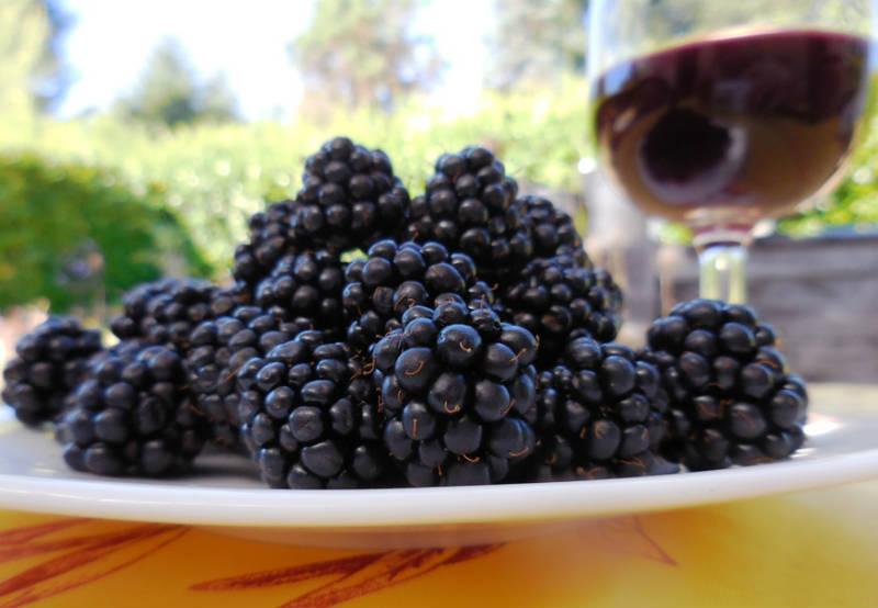 Domaće kupinovo vino - lekovitost i recepti