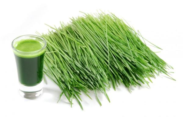 Pšenična trava - lekovita svojstva, upotreba i recepti