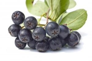 Sadnja, uzgoj i sorte aronije