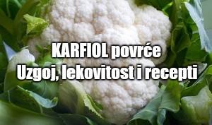 Karfiol povrće - uzgoj, lekovitost i recepti