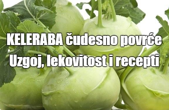 Keleraba povrće - uzgoj, lekovitost i recepti